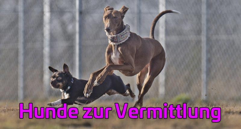 Hunde zur Vermittlung