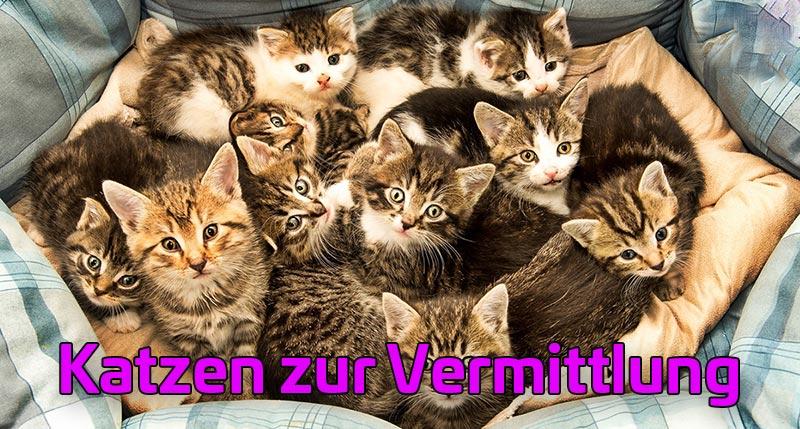 Katzen zur Vermittlung